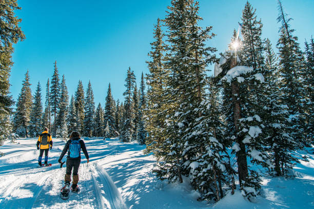 Male and Female Caucasian Adult Hikers Snowshoeing Together on a Groomed Path Outdoors in the Snow Male and Female Caucasian Adult Hikers Snowshoeing Together on a Groomed Path Outdoors in the Snow national forest stock pictures, royalty-free photos & images