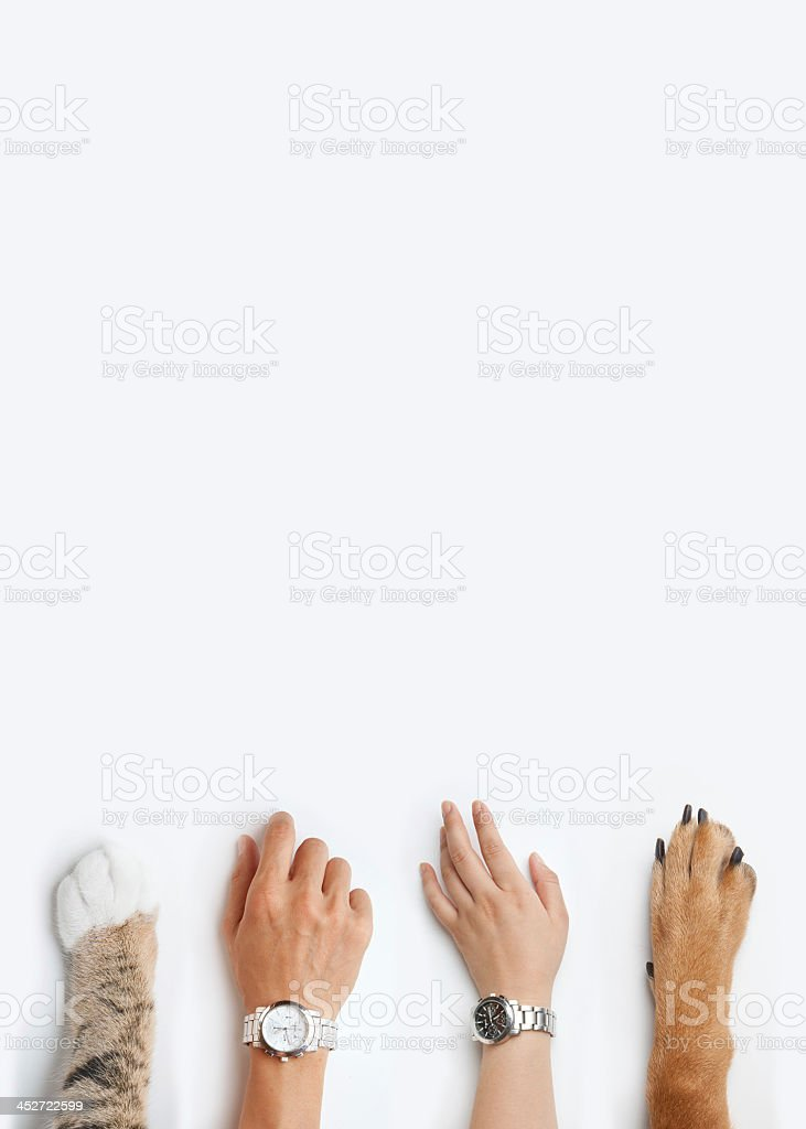 Male and female hands with watches next to dog and cat paws stock photo