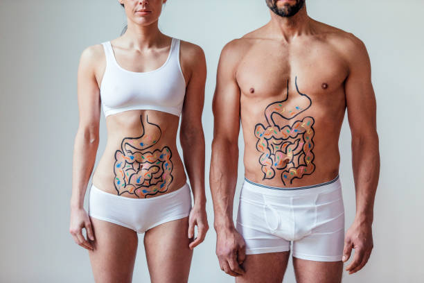 Male and Female Intestinal Health Concept Female and  with an illustration on their abdomen of intestines with colourful bacteria. Beneficial gut microbiome biological process stock pictures, royalty-free photos & images