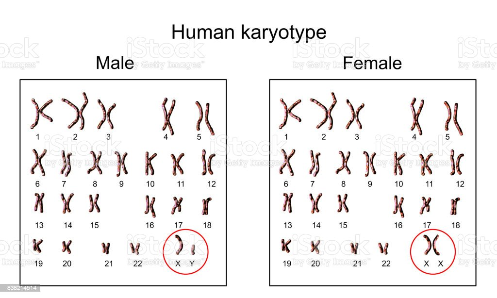 Male and female karyotype stock photo