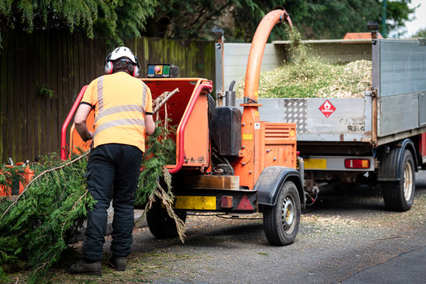Male Arborist using a wood chipper machine stock photo