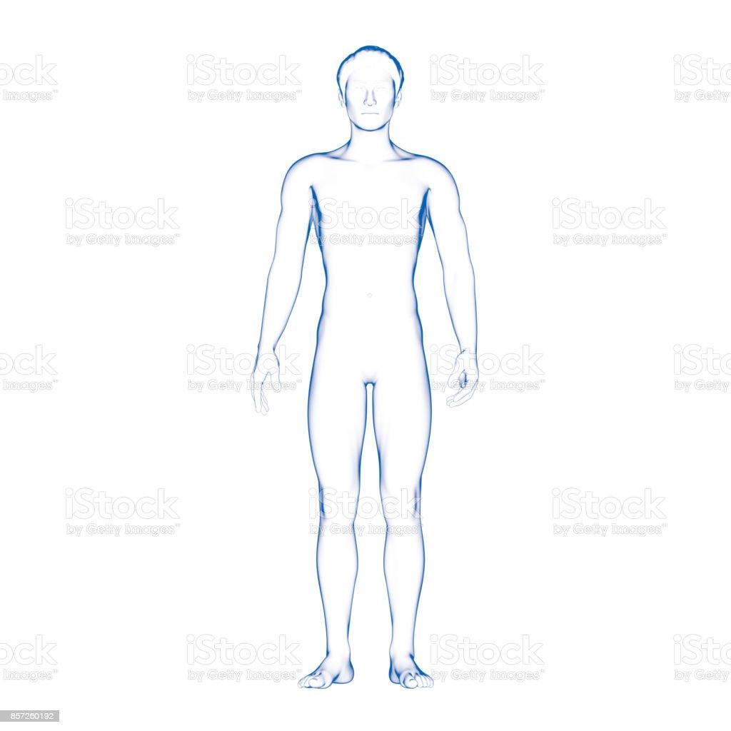 Male Body Illustration, Human stock photo