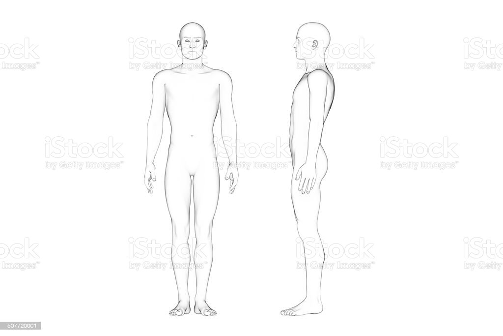 Male Body Proportions, Line Art, White Background stock photo