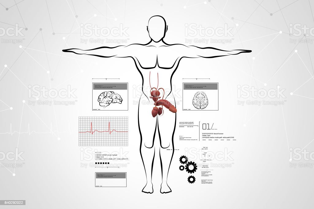 Male Body Sketch With Urinary System Stock Photo - Download