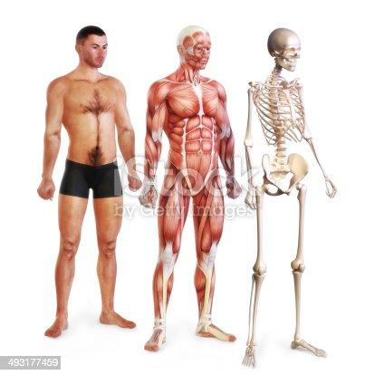496193203istockphoto Male body systems illustration 493177459