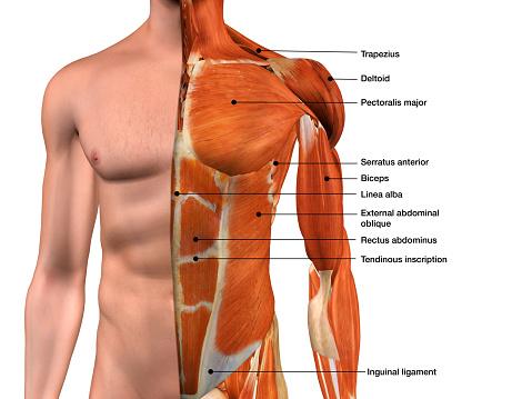 Medical diagram stock photos