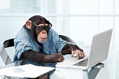 istock Male chimpanzee in business clothes 143921954