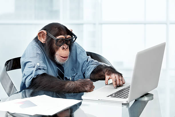 male chimpanzee in business clothes - ape stock pictures, royalty-free photos & images