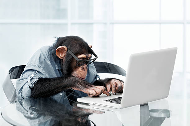 male chimpanzee in business clothes - monkey stock photos and pictures