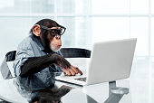 istock Male chimpanzee in business clothes 169937776