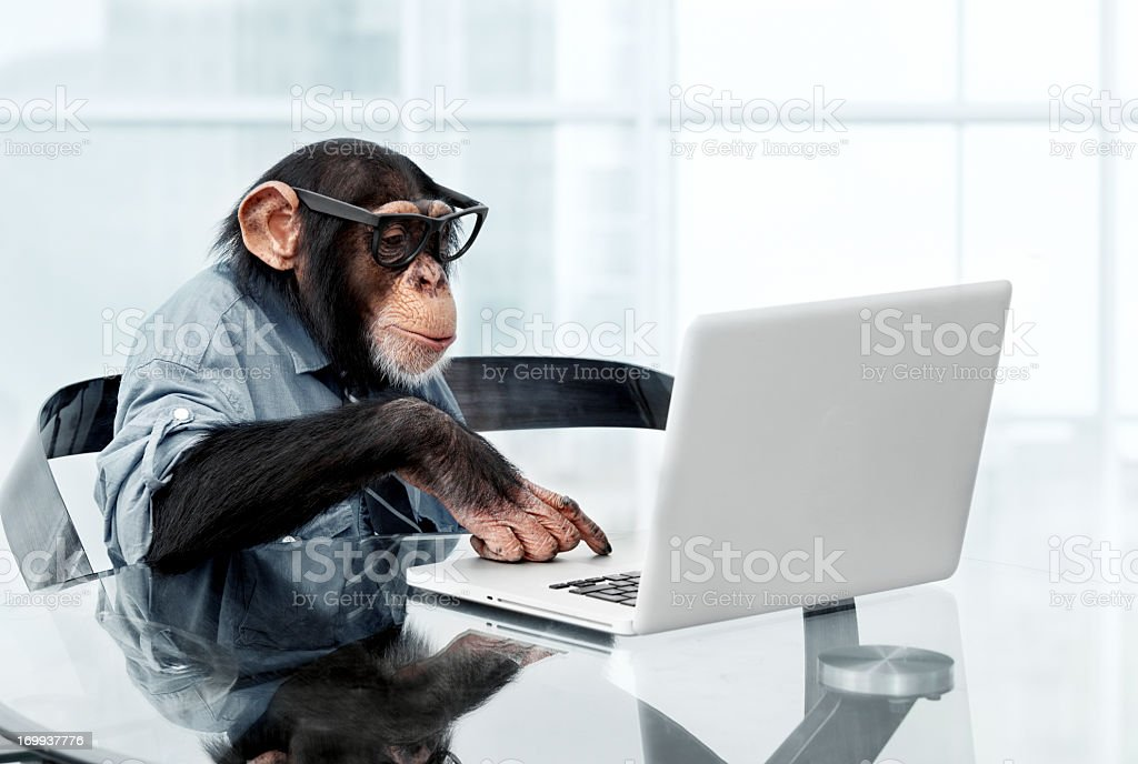 Male chimpanzee in business clothes stock photo