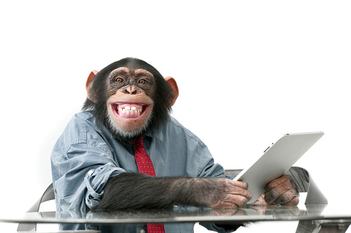 Male chimpanzee in business clothes using a digital tablet