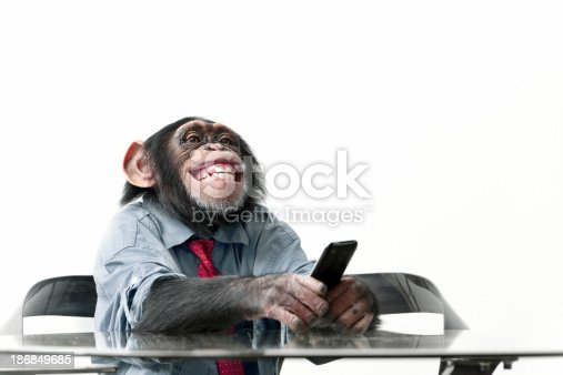 Male chimpanzee in business clothes with using a cellphone