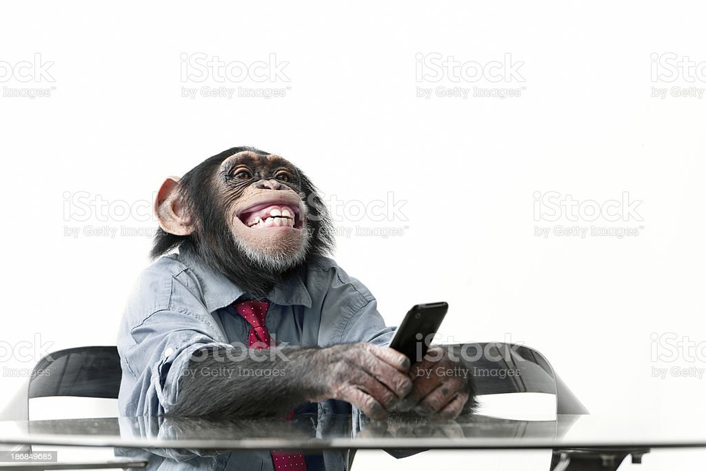 Male chimpanzee in business clothes​​​ foto
