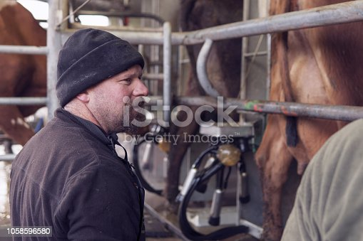 istock Male dairy farmer at work in the milking shed 1058596580