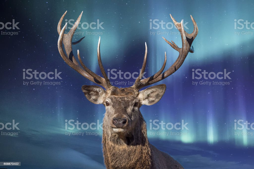 male deer in northern lights background stock photo