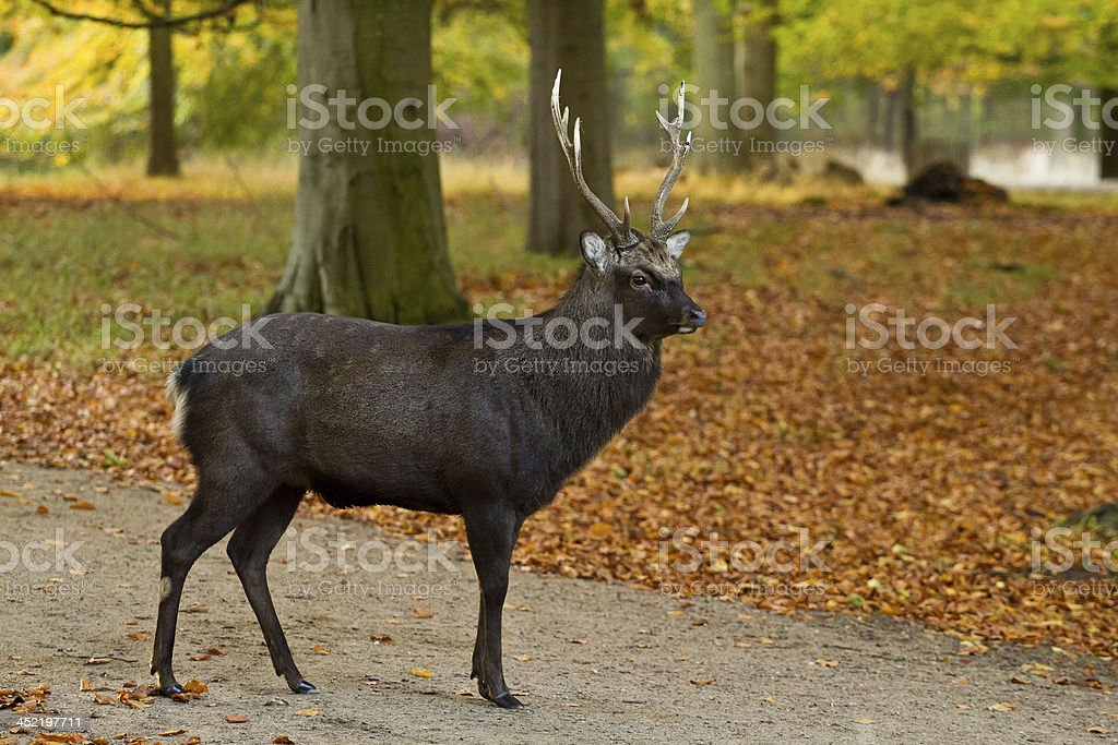 Male deer royalty-free stock photo