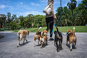 Man walking dogs in the park as a part of his work