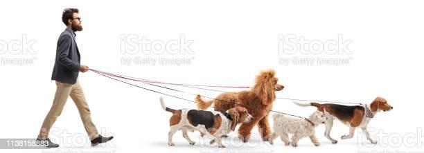 Male dog walker walking four different dogs picture id1138158883?b=1&k=6&m=1138158883&s=612x612&h=a6exijsfns1ir9 hbnvs1heifi 8hp9lckckaoiydaa=