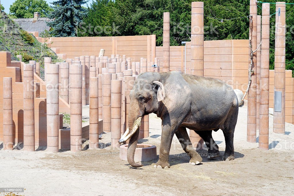 Male elephant in Copenhagen Zoo, Denmark royalty-free stock photo