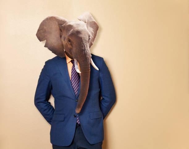 Male elephant in office clothing suit and shirt stock photo