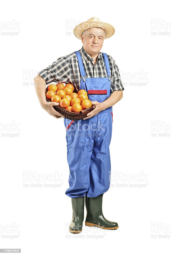 Male farmer holding a basket full of oranges stock photo