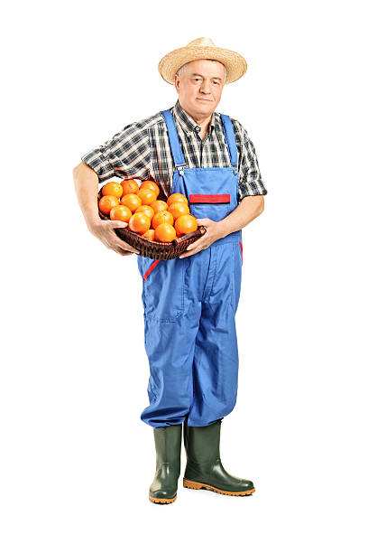 Male farmer holding a basket full of oranges Full length portrait of a male farmer holding a basket full of oranges isolated on white background bib overalls stock pictures, royalty-free photos & images