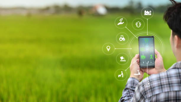 A male farmer is working in the field his using a mobile phone with Innovation technology for smart farm system. stock photo