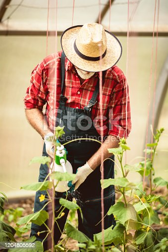 Male farmer watering seedlings in greenhouse with a spray gun