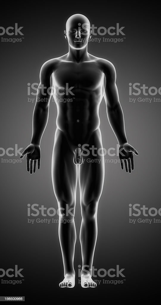Male figure in anatomical position stock photo