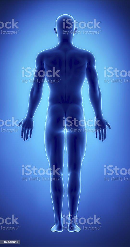 Fotografía de Hombre Figura En La Posición Anatómica Vista Posterior ...