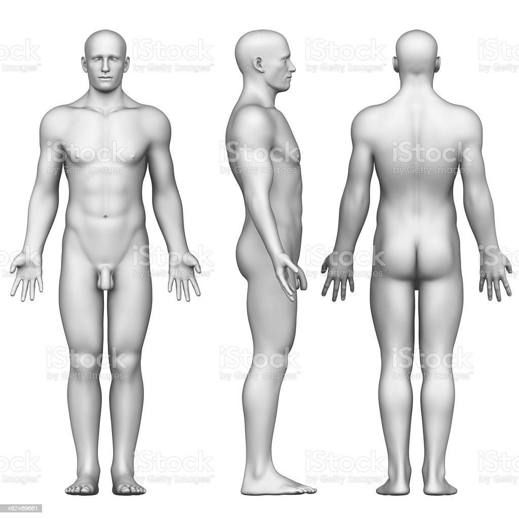 Fotografía de Hombre Figura En La Posición Anatómica Posterior ...