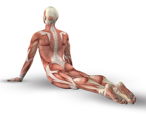 3d male figure with muscle map in yoga pose stock photo