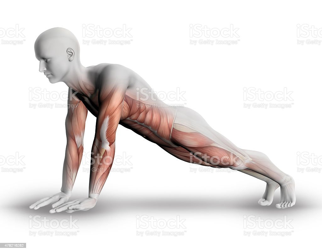 3d Male Figure With Partial Muscle Map In Yoga Pose stock photo | iStock