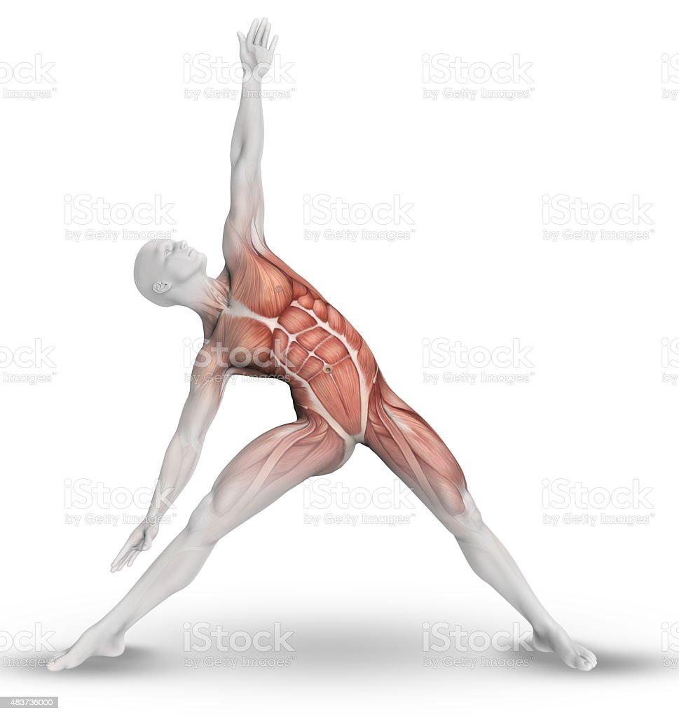 3d Male Figure With Partial Muscle Map In Yoga Pose Stock Photo - Download Yoga Muscle Map on yoga energy, yoga international, yoga back, yoga stretches, yoga adrenal glands, yoga leg workout, yoga history, yoga skin, yoga peace, yoga anatomy, yoga strength, yoga mind, yoga bones,