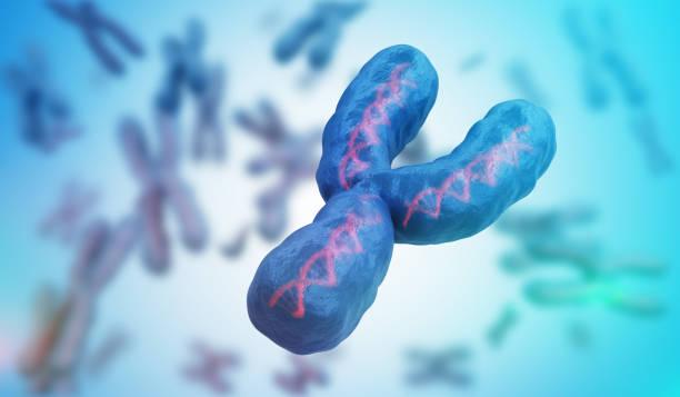 Male gender Y chromosome. Genetics concept. 3D rendered illustration. stock photo