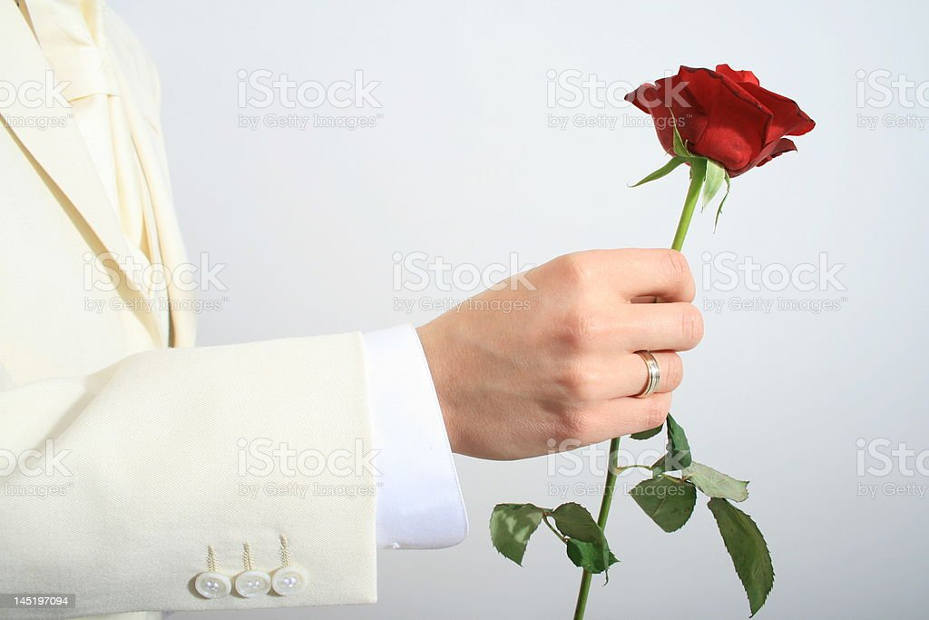 male giving rose royalty-free stock photo
