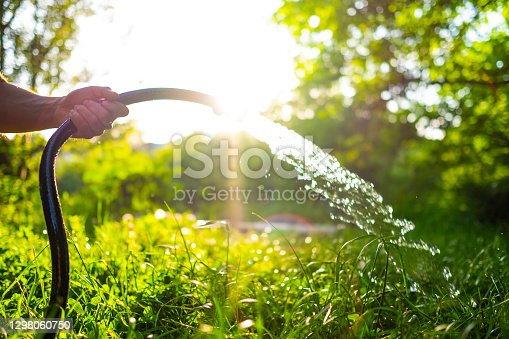 istock Male hand holding hose with pouring water in a beautiful green garden at sunset 1298060750