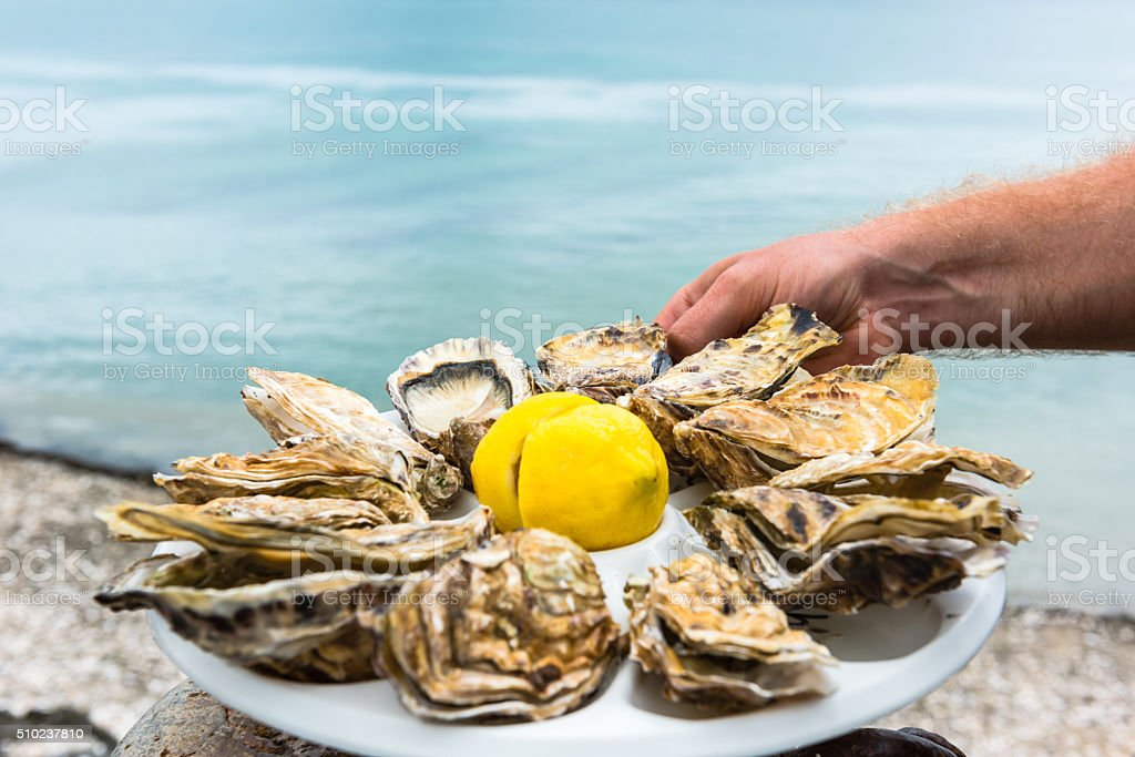 Male hand holding oysters stock photo