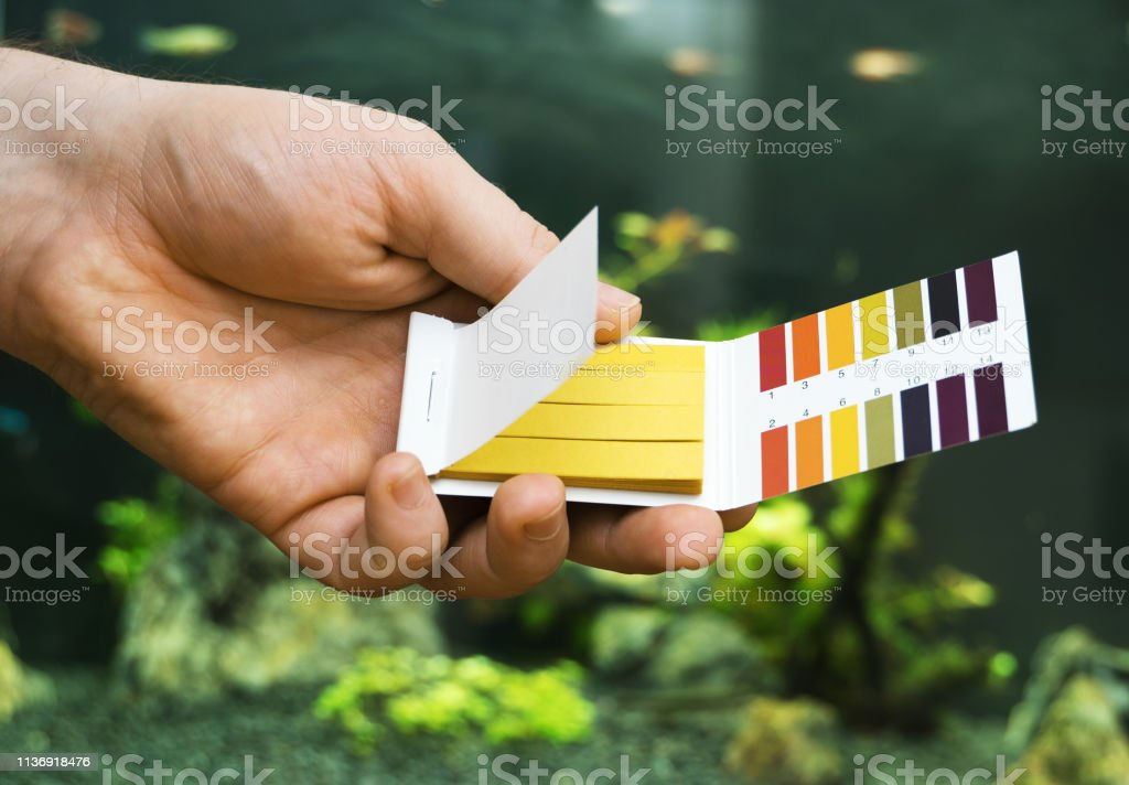 Male hand holding PH tests in front of freshwater aquarium. stock photo