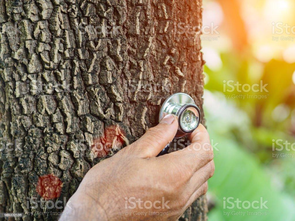 Mâle main écoute un arbre avec un stéthoscope, save concept environnement. - Photo de Adulte libre de droits