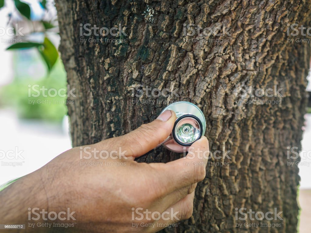 Male hand listening a tree with a stethoscope, save environment concept. zbiór zdjęć royalty-free