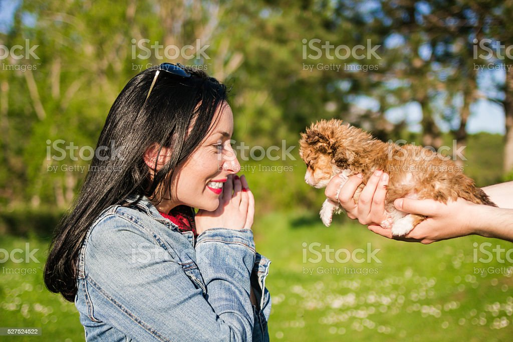 Male hands holding cute little puppy for a gift stock photo