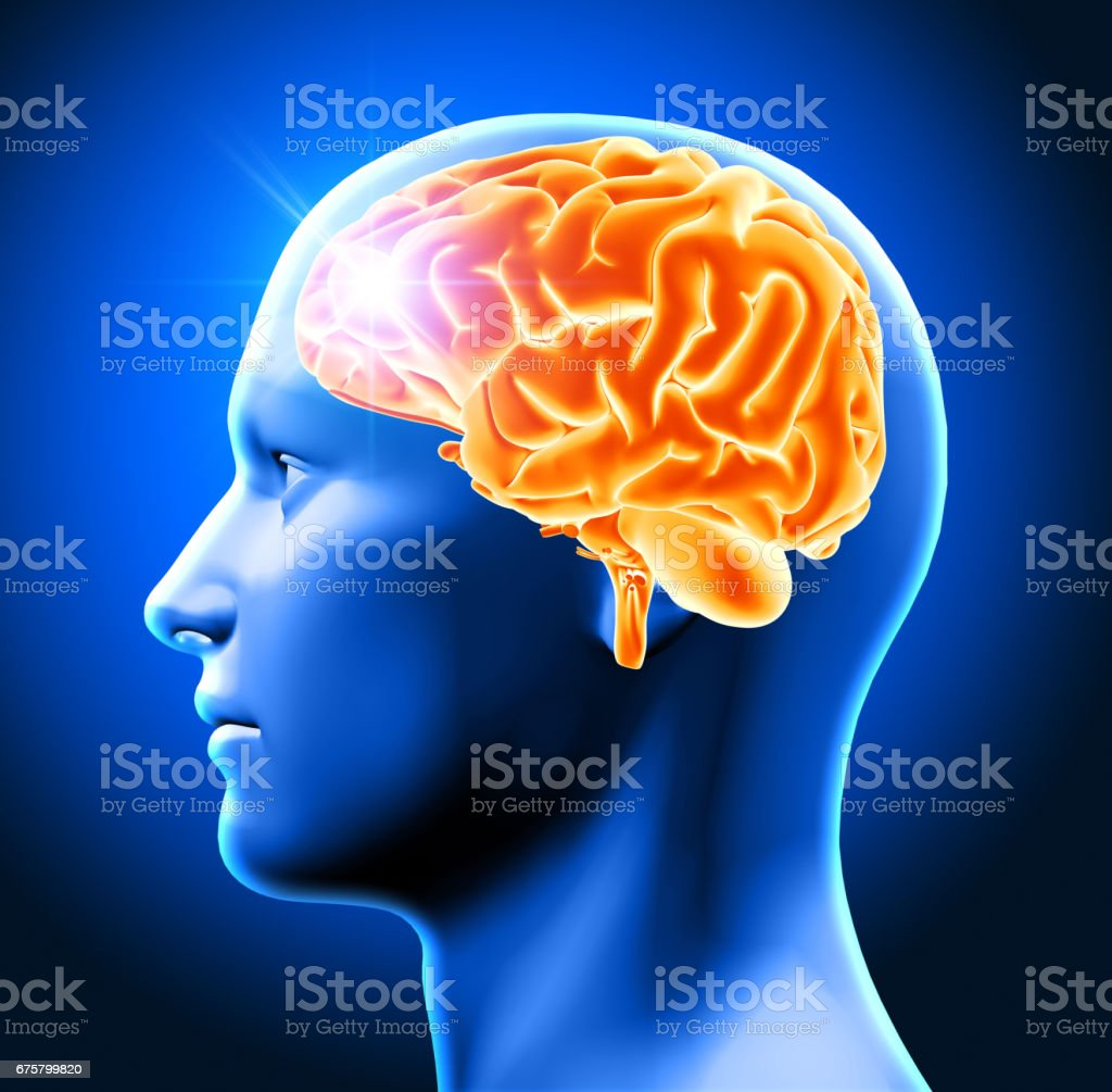 3D male head with brain stock photo
