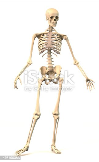 istock Male Human skeleton, in dynamic posture, front view. 476190083