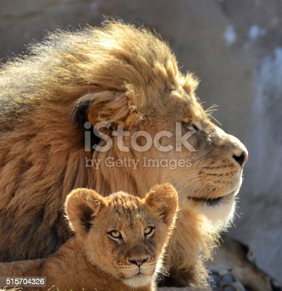 istock Male Lion and Cub. 515704326