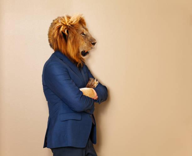 lion mâle dans le costume et la chemise de vêtements de bureau - imitant un animal photos et images de collection