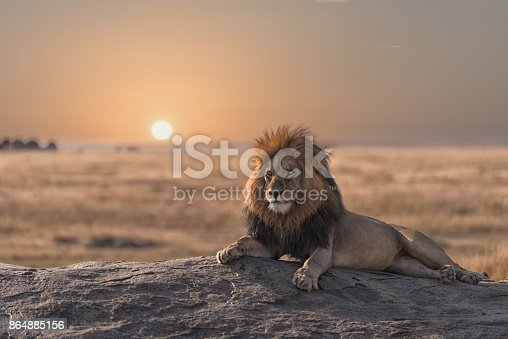 This photo was shoot during my game drive safari in Serengeti national park, Tanzania. The male lion is sitting on the top of the rock and look for his land.