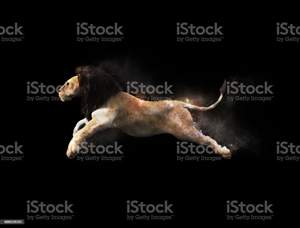 A male lion moving and jumping stock photo