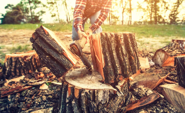 Male Lumberjack in the black-and-red plaid shirt with an ax chopping a tree in the forest. Male Lumberjack in the black-and-red plaid shirt with an ax chopping a tree in the forest. lumberjack stock pictures, royalty-free photos & images